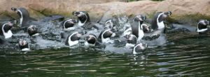 view to penguins in water by ingeline-art