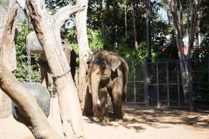 Baby elephant Stock by CNStock