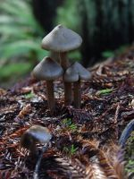 mushrooms in arcata by suicideseda