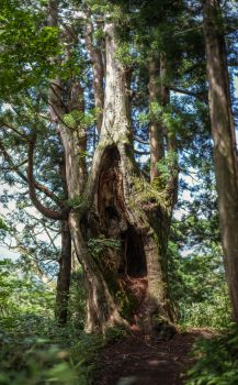 Beutiful Woman Hollow Tree by Quit007