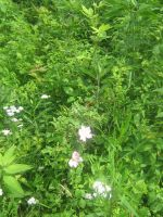 wild rose bush by CotyStock