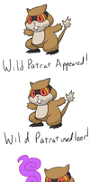 Wild Patrat Appeared by Rememorable