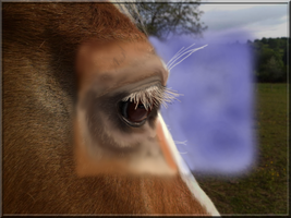 Oeil de biche digital painting: WIP by Manduleen