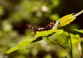 butterfly by bezag