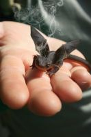 Real dragon ''Mini toothless'' by BayerTE1