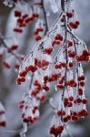 Winter Frost by erbphotography