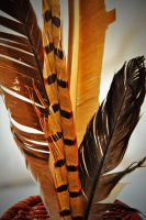 Plumage Two by ShelbyMelissa