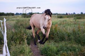Cantering Callie_1 by popui