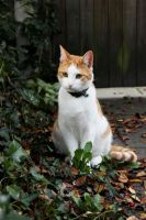 The sitting cat by ManaGesi
