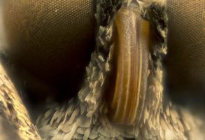 the Face of a Moth by pfrancke