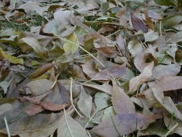 leaves on the ground by Exor-stock