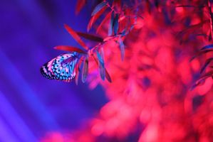 Butterflies and Lights by lilylatigresse