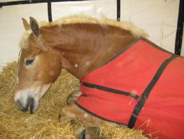 Draft Horse Stock 4 by lee-mare