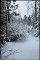 Winter Wonders IX by Eirian-stock