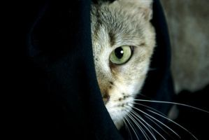 The Mystery Cat by JacquiJax