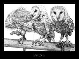 Barn Owls by Digital-Burn
