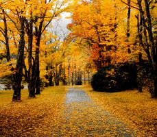 Autumn pathway by kevron2001