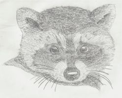 Letter Raccoon by Cartcoon