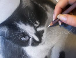 Rescue Cats WIP 2 by secrets-of-the-pen