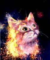 sparkling cat by Arnelica