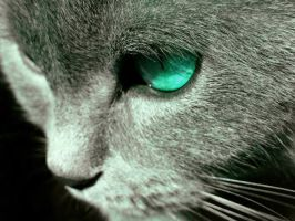Cat with blue eyes... by A-anarchia