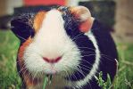 Henry-etta by zarengo