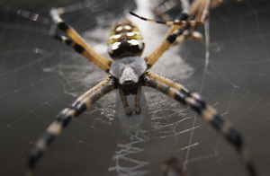 She-Spider Closeup by Shadow-D-Keeper