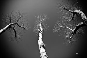 The ghosts of the nature by emregurten