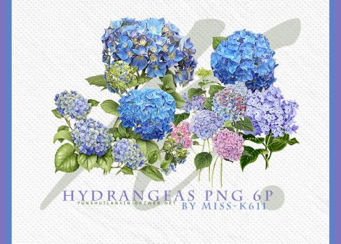 Hydrangeas Png by MISS-K611