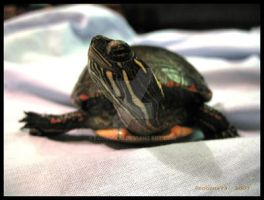 Lounging Painted Turtle by Foozma73