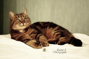 The cat by EliseJ-Photographie