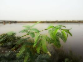 Sky, Nile and leaves by KStwins4ever