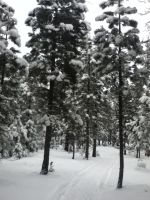 snow in the trees by Demoned146
