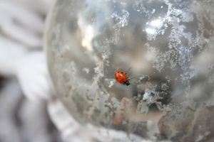Ladybug on globe by Winged-Stock