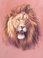 Lion head study by Bisanti