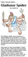 Natural Badass #2 - The Gladiator Spider! by Aonon