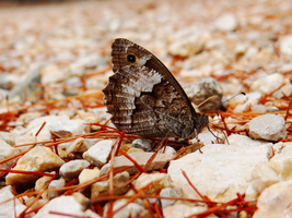 Greece -3- : Butterfly at Epidaurus by IoannisCleary