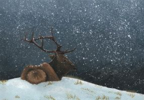 Red Deer Stag by Nylak