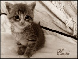 Casi - the little kitten by Happy-every-day