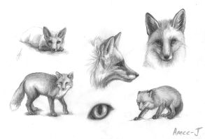 Foxes by Amee-J