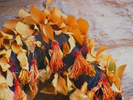 Dried flowers by StavaIsrael