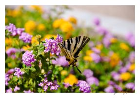 Butterfly by LeonorGracias