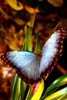 Butterfly View by buildingclimber