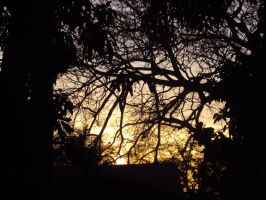 behind the broken branches. by Girlayy