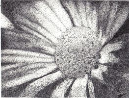 Flower-black and white- by Corky-Lunn