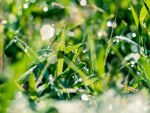 Macro photography 13 by BlueX-pl