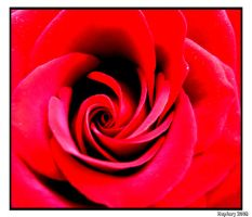 Red Rose Heart by crystalfalls