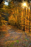 Fall Trail by butterphoto