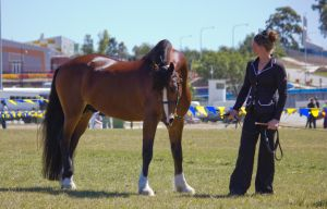 STOCK - Gold Coast show 239 by fillyrox