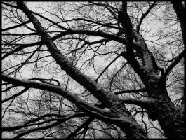 Snow on Branches by AntiRetrovirus